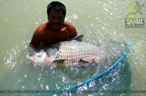 Рыбалка на Самуи и соседних островах