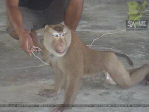 Театр обезьян